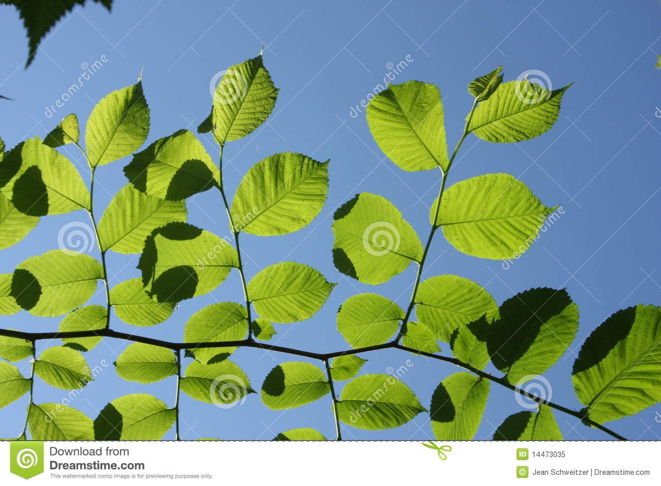 Forest Spring Royalty Free Stock Photo Image 14473035