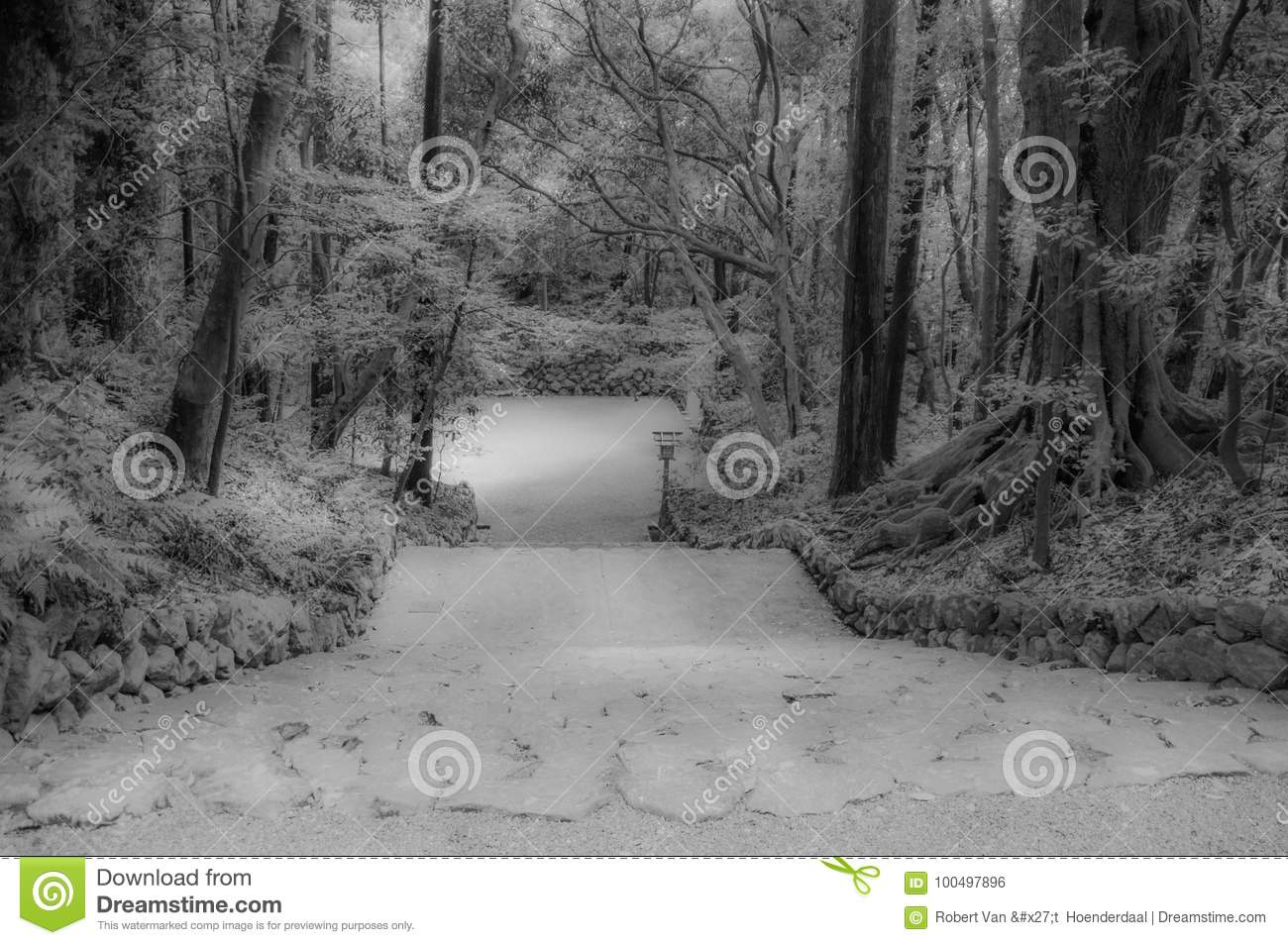 Forest With Staircase In Black e branco