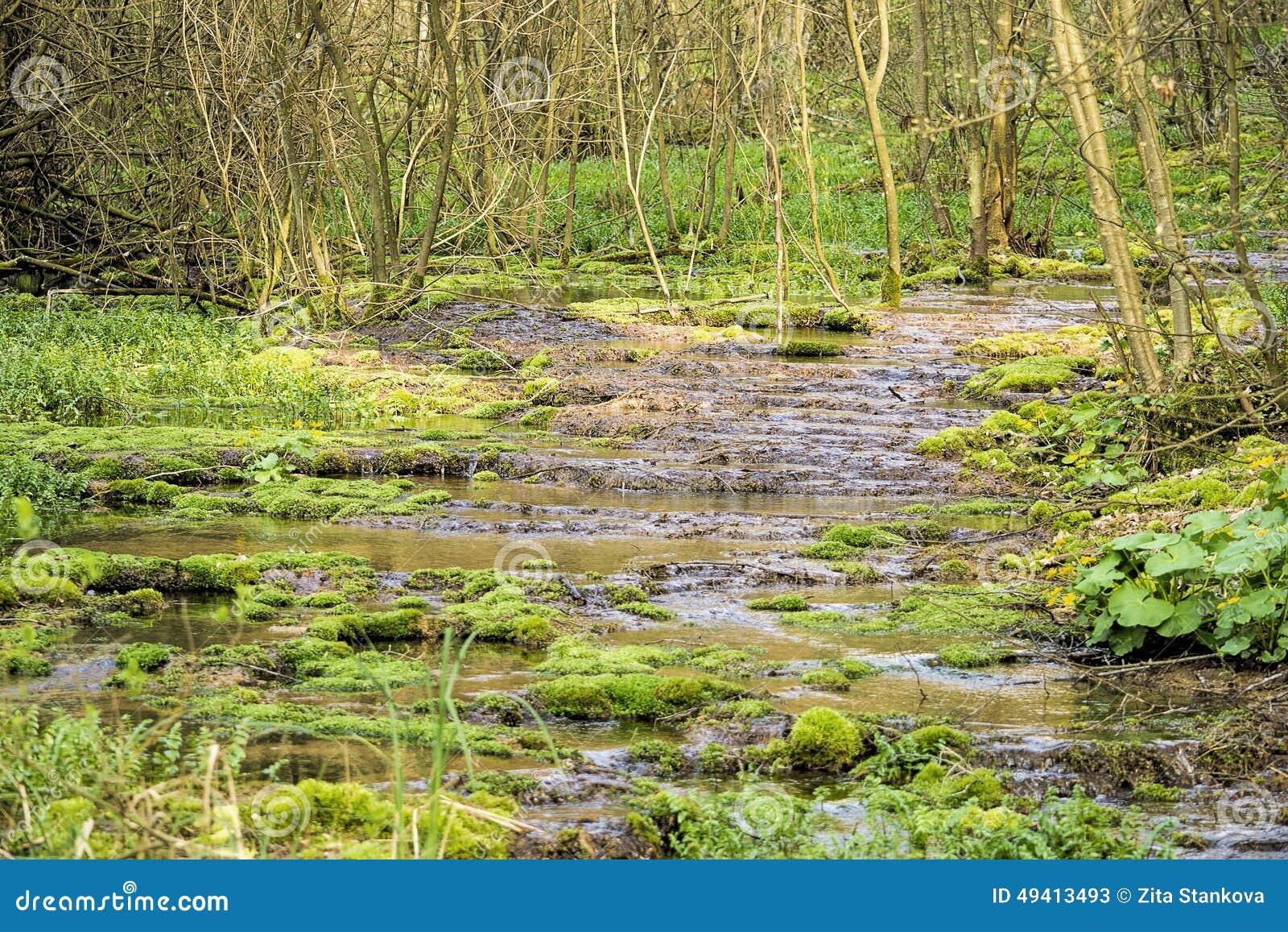 Download Forest Stream stockbild. Bild von klar, nave, strom, ruhig - 49413493
