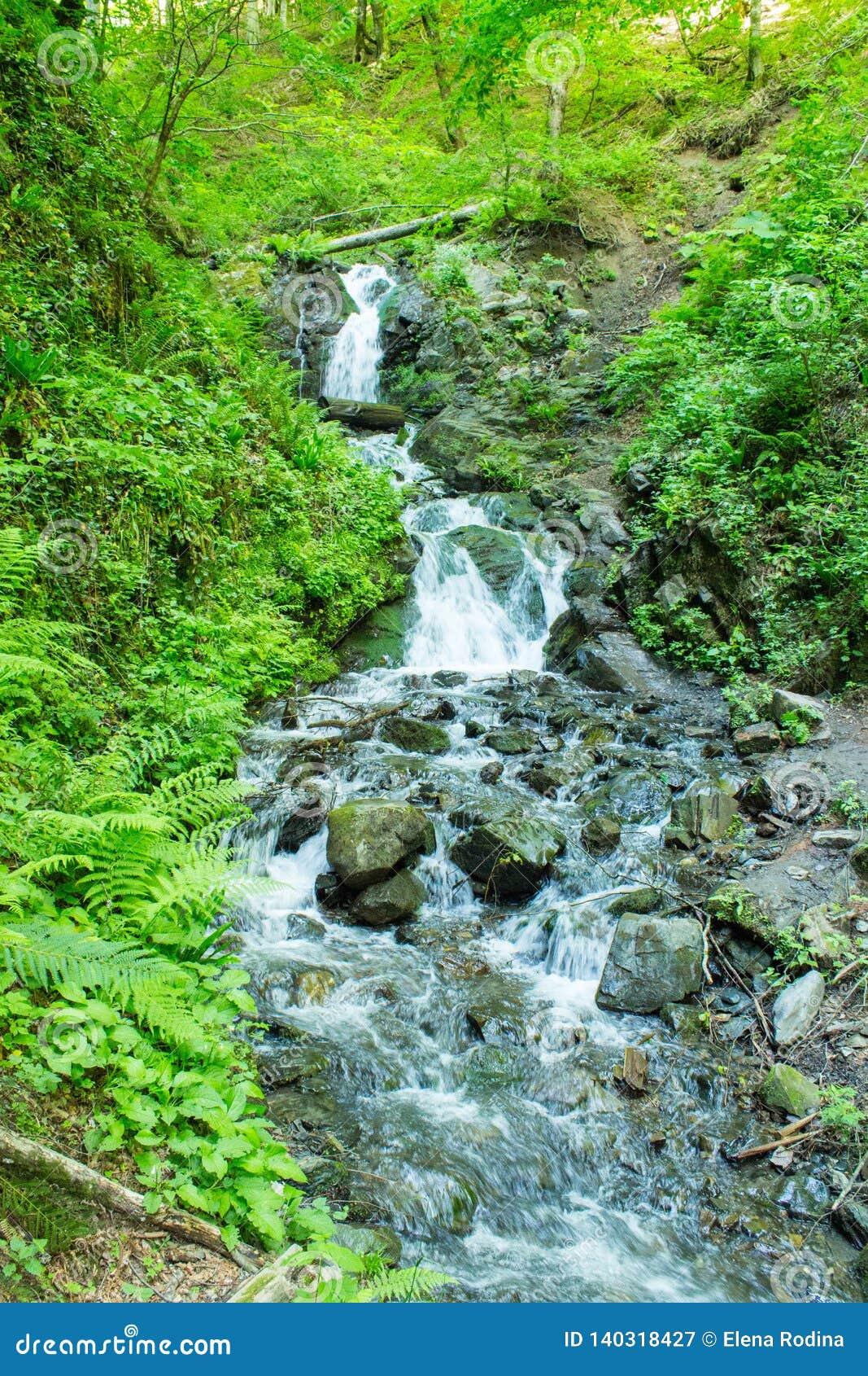 Forest Stream Torrente montano fra il verde Flusso della montagna fra le pietre muscose