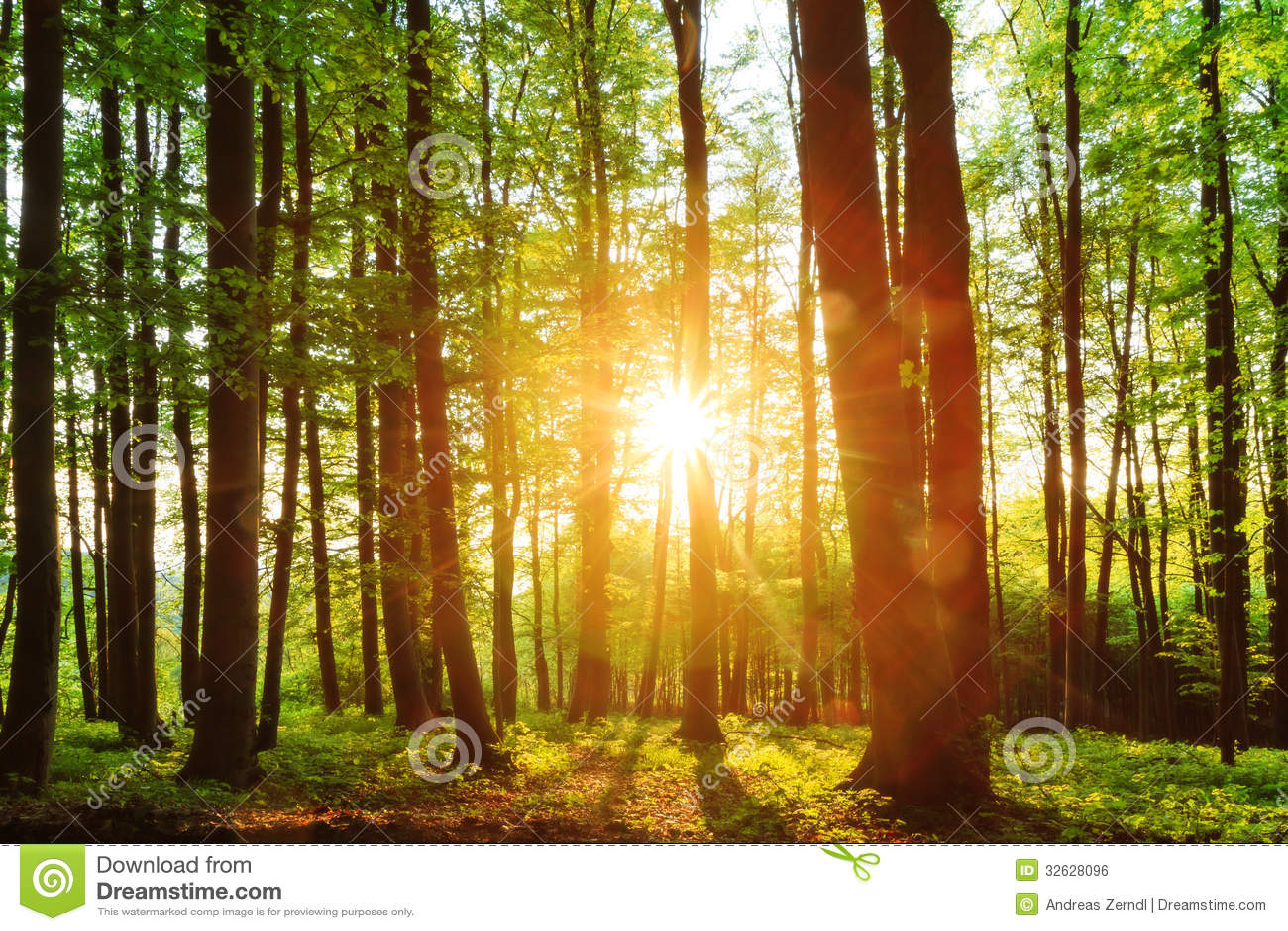 Forest Sunset bonito