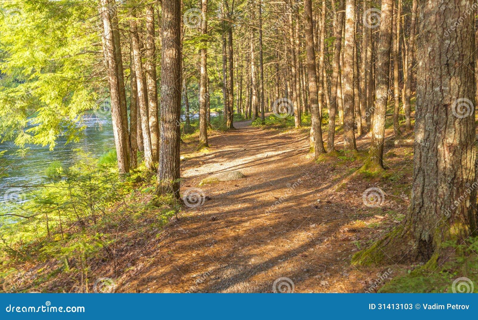 Forest Trail (Kejimkujik National Park , Nova Scotia, Canada).