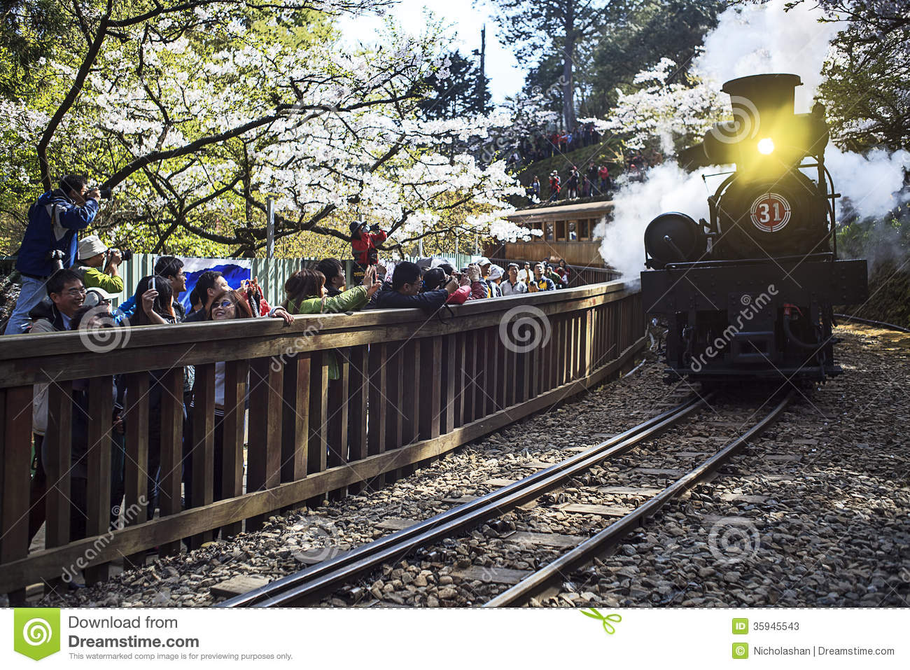 Forest train on railway with sakura in Alishan National Scenic Area ...