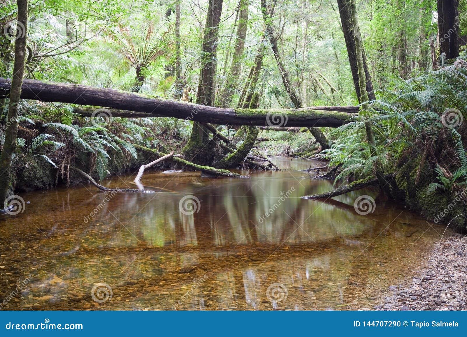 Forest of Tranquility - Australian Rainforest Sanctuary