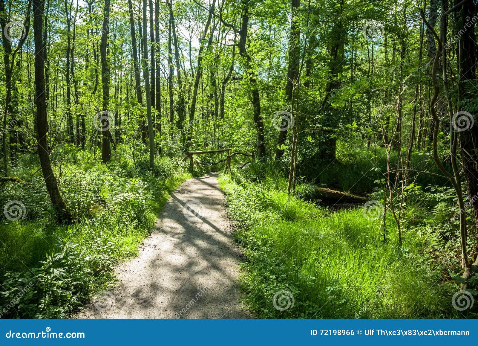 Forest Trees Park Footpath Springtime