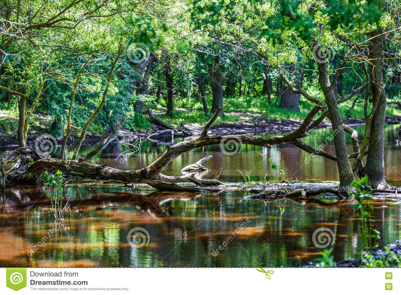 Forest trees reflection in water