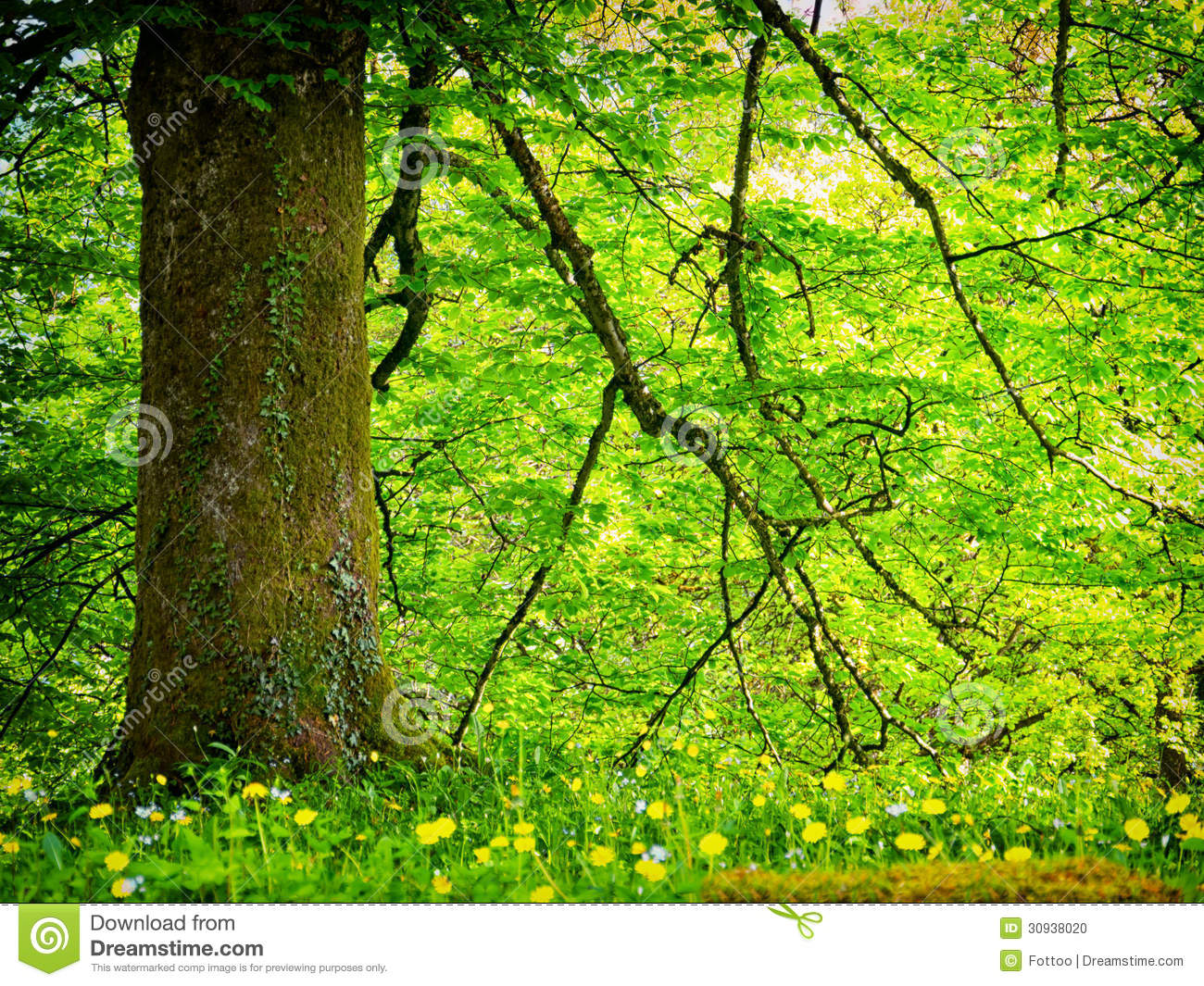 Forest Stock Photo. Image Of Back, Light, Green, Sunlight