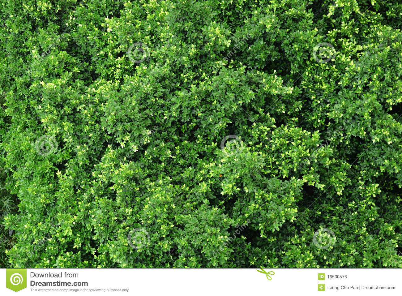 Forest View From Top Royalty Free Stock Image Image