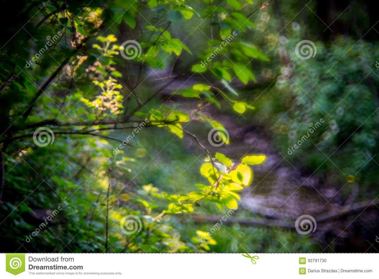 Forest wallpaper stock photo  Image of lenses, perfection - 92791730