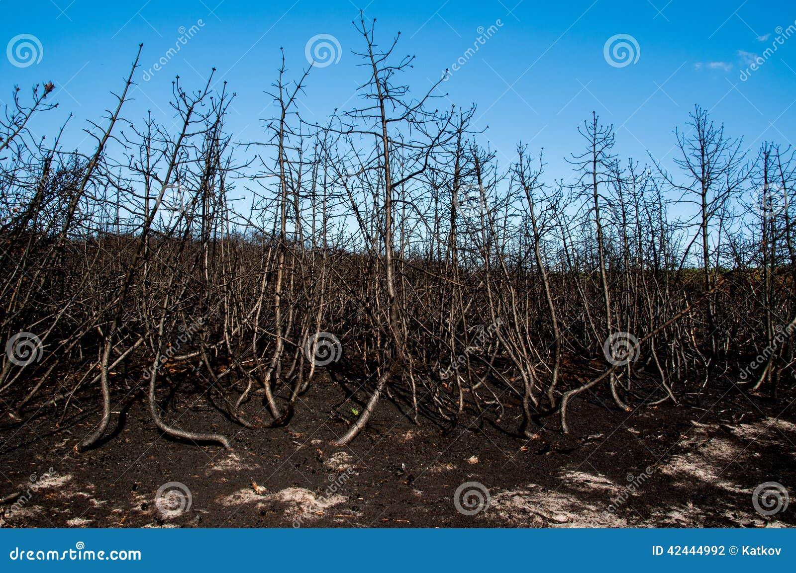 Forest Wild después del fuego