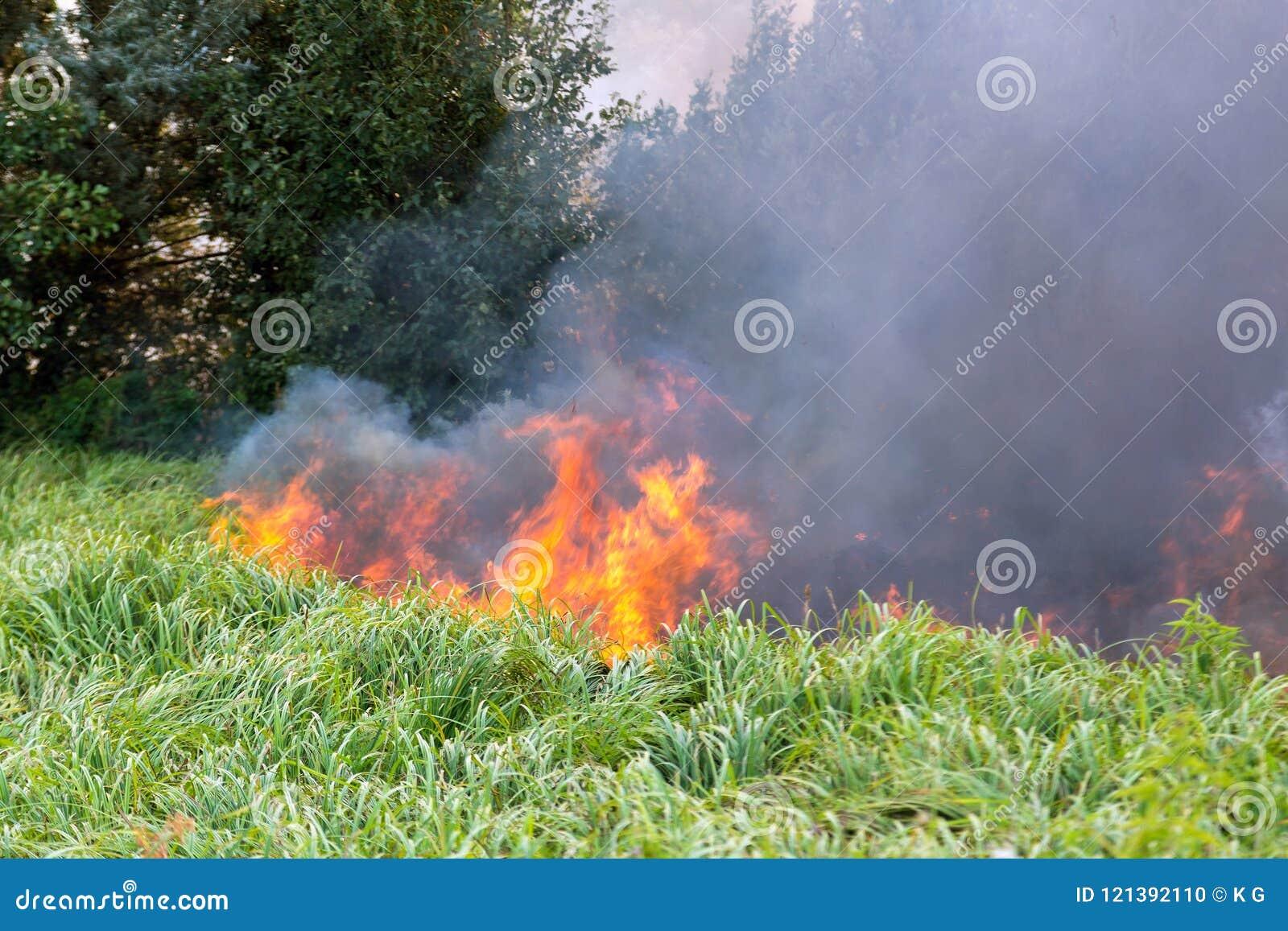 Forest Wildfire Brennendes Feld des trockenen Grases und der Bäume Schwerer Rauch gegen blauen Himmel Wildes Feuer wegen des heiß