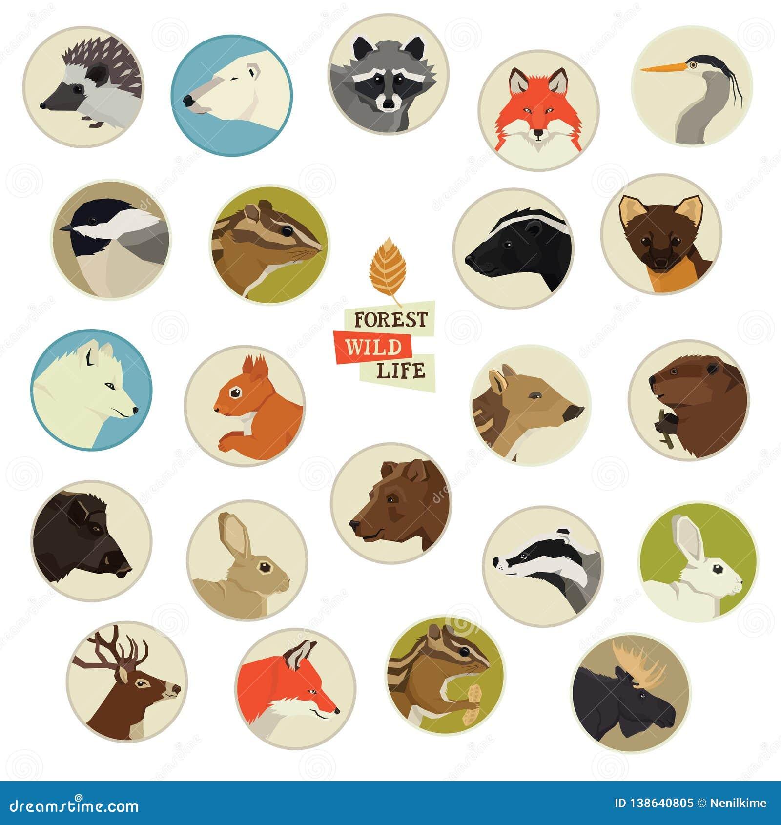 Forest Wildlife Animals Round-kaders