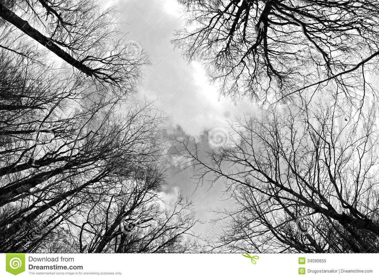 Winter Forest Black and White Photo Poster | Zazzle |Winter Forest Black And White