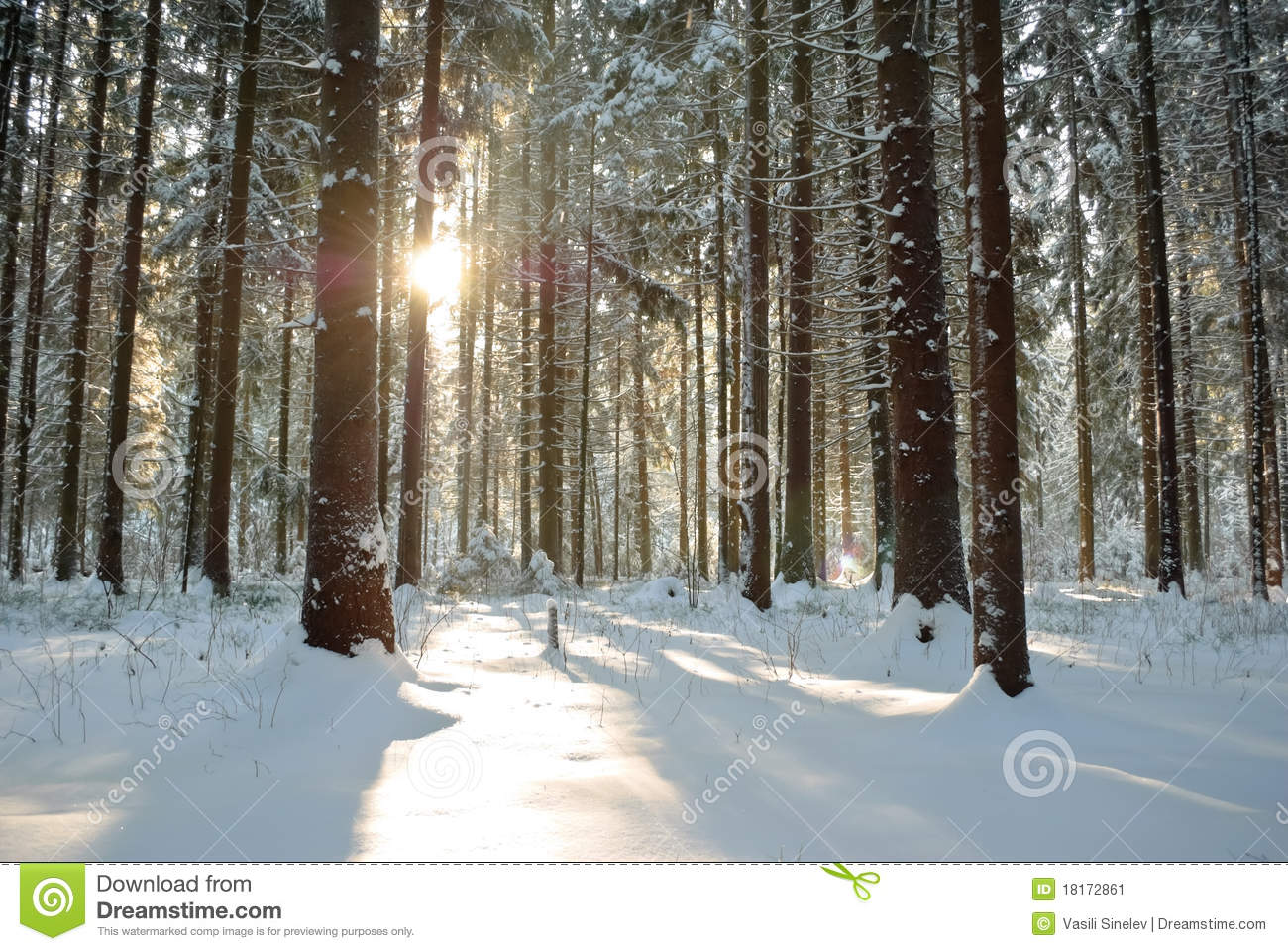 Forest in winter under sun