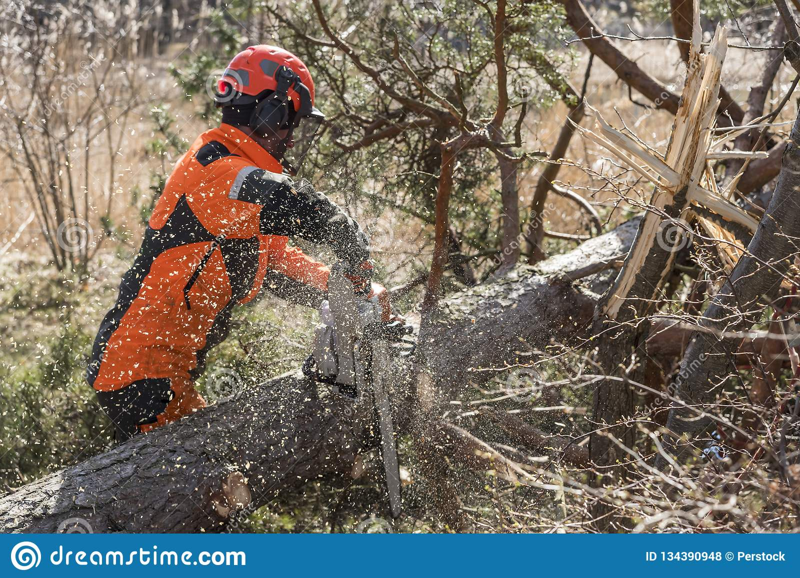 Forest worker cutting a tree with a chainsaw