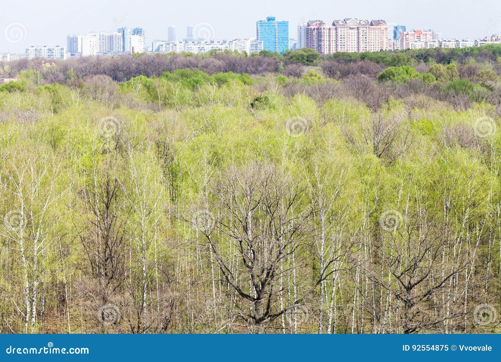 Foresta con giovane fogliame e orizzonte in primavera