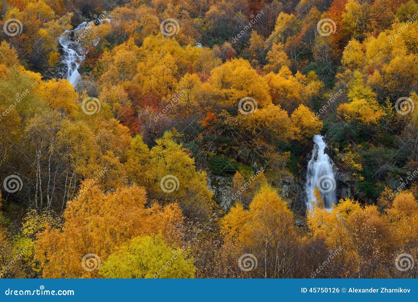 Foresta d autunno
