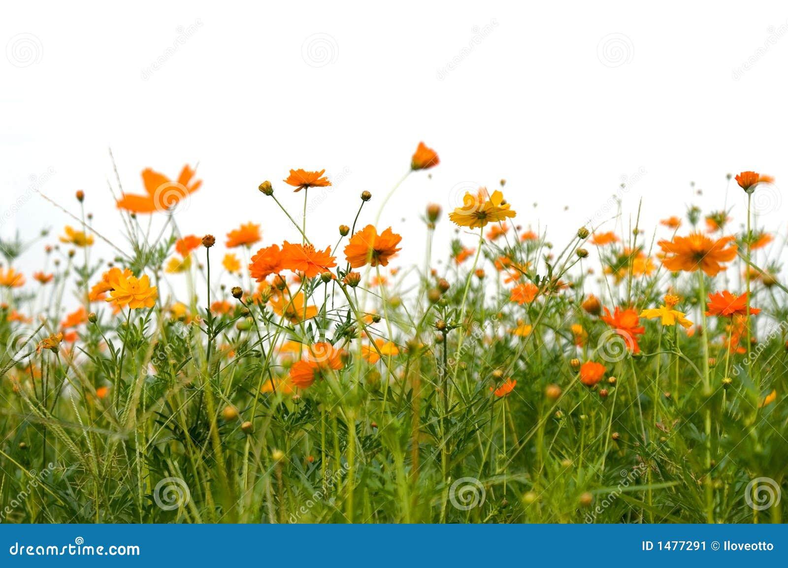 Foresta dei fiori