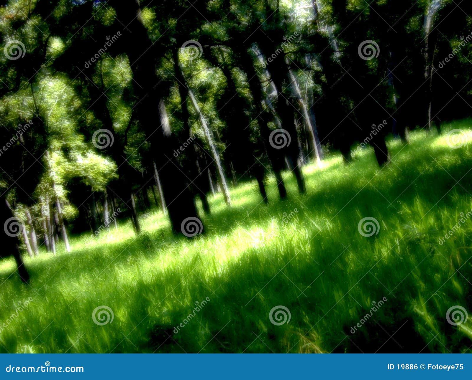 Download Foresta dei sogni fotografia stock. Immagine di foresta - 19886