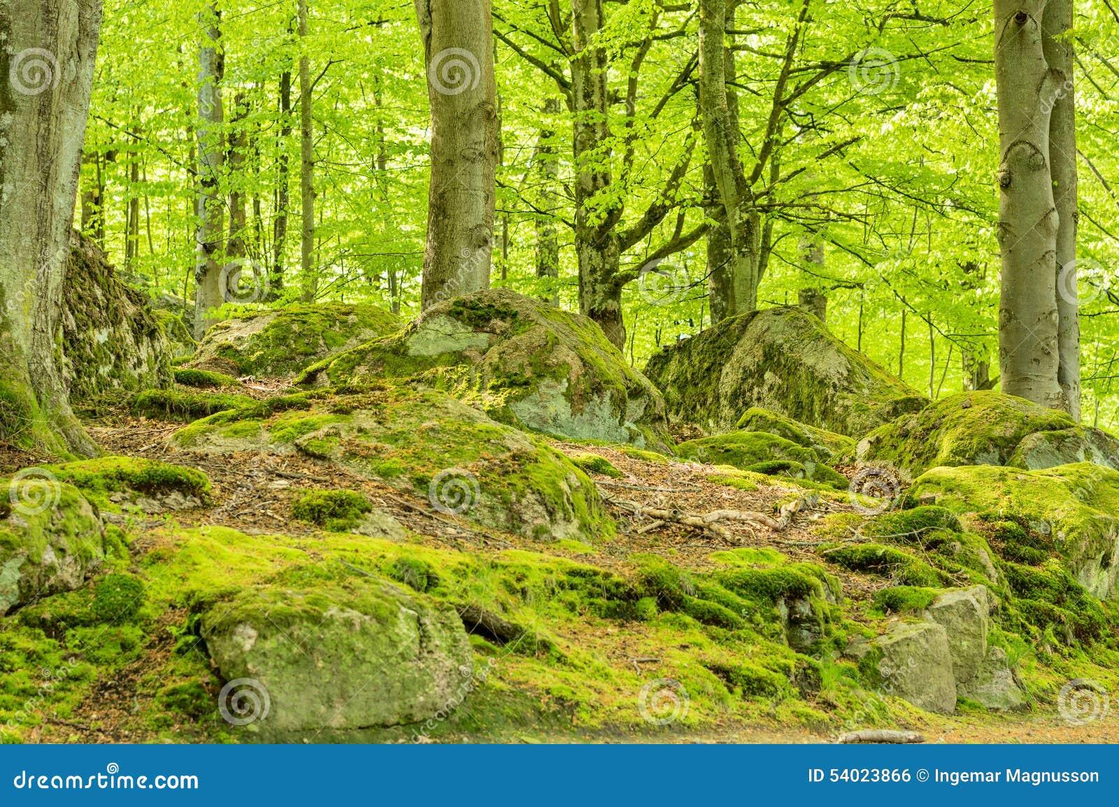 Foresta del faggio