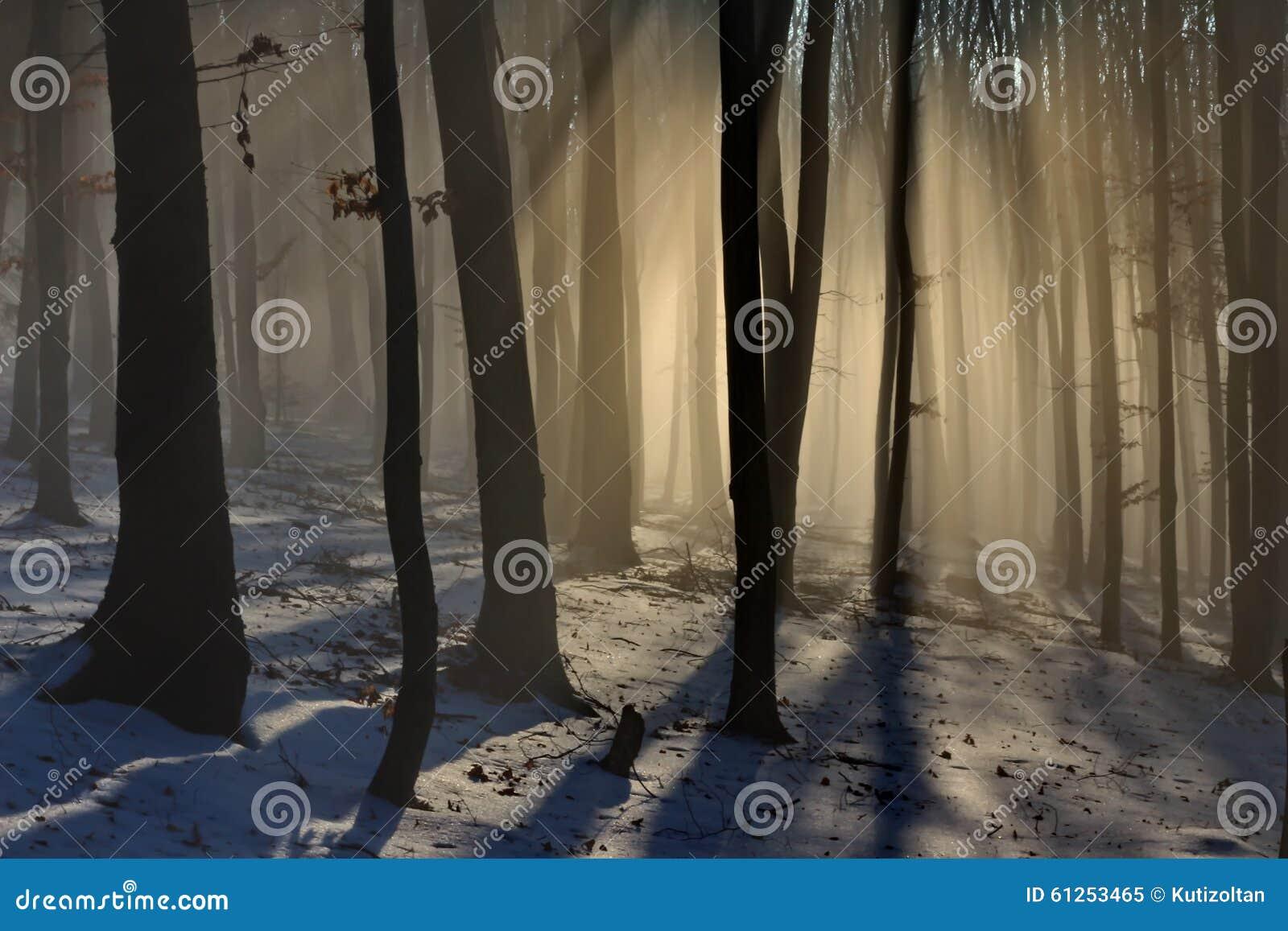 Foresta del faggio sulle luci in anticipo