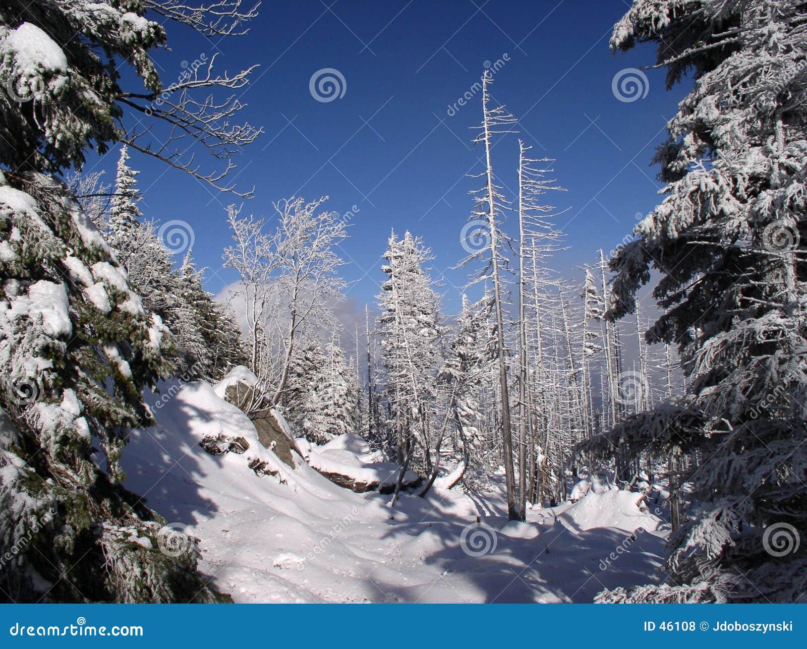 Foresta della montagna