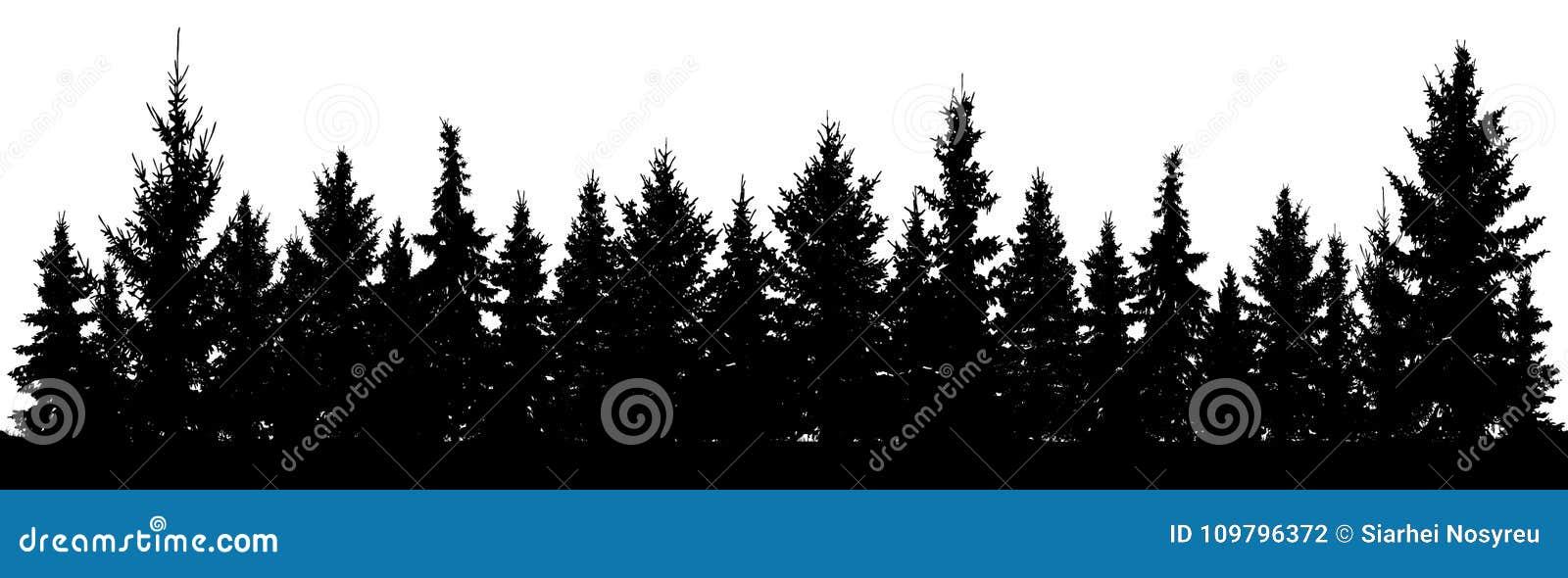 Foresta della siluetta degli abeti di Natale Abete rosso conifero Parco di legno sempreverde Vettore su fondo bianco