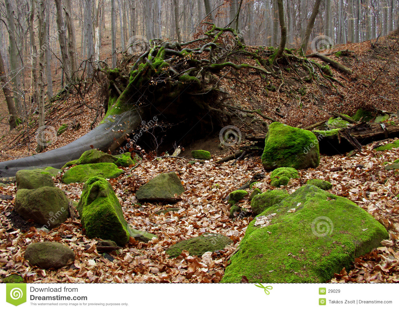Foresta di autunno