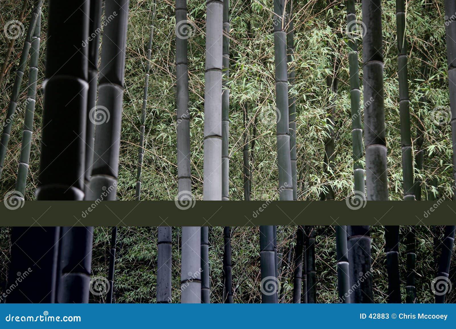Foresta di bambù alla notte