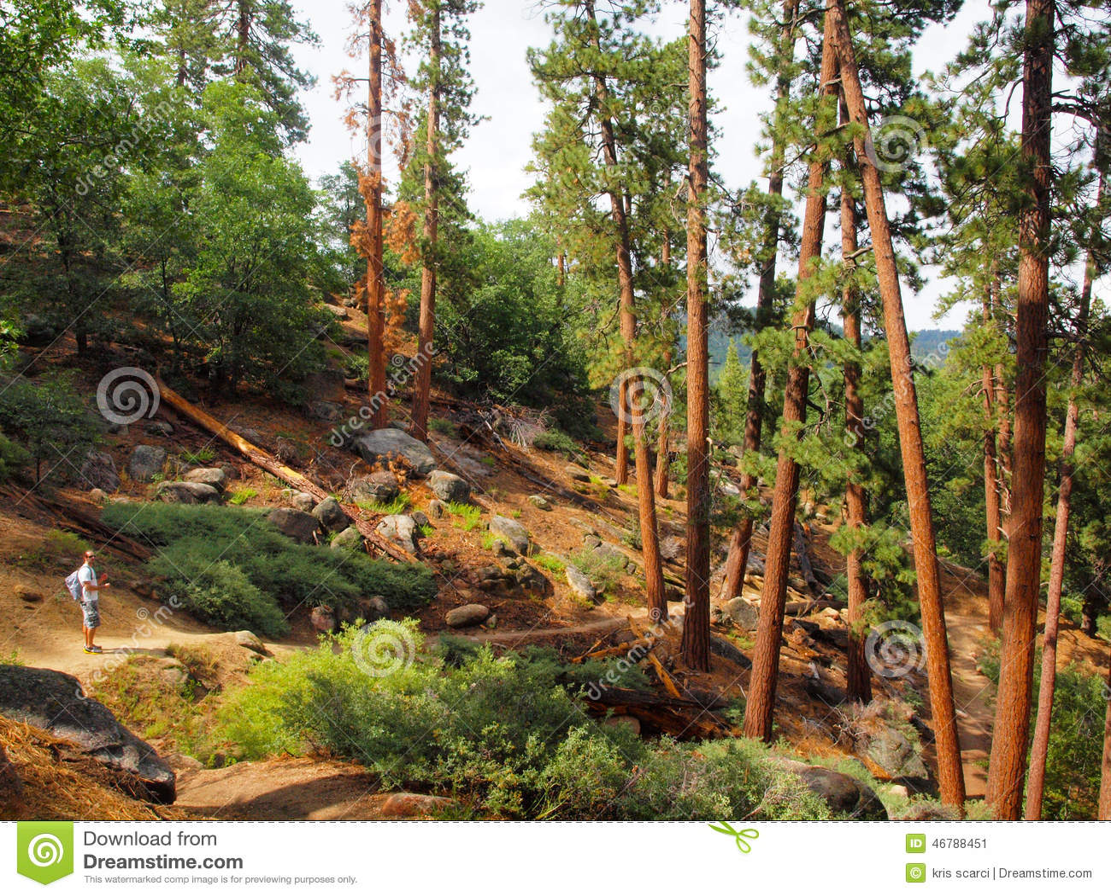 Foresta di Big Bear