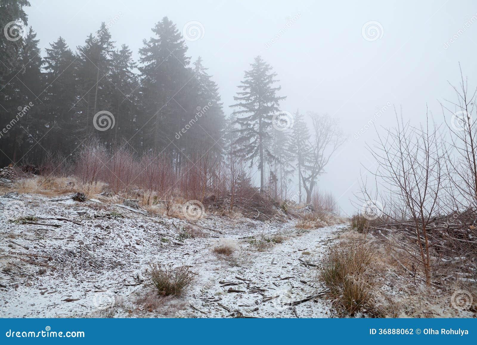 Download Foresta Di Conifere In Nebbia Di Inverno Fotografia Stock - Immagine di paesaggio, misty: 36888062