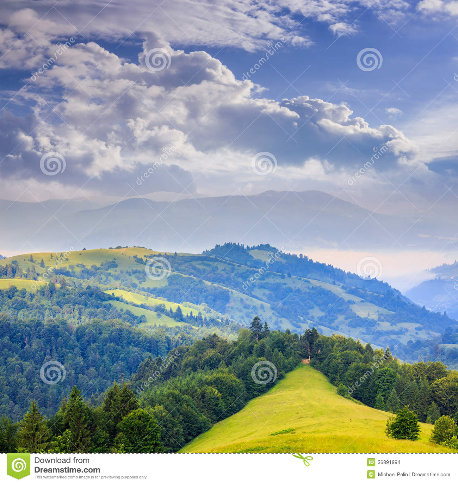 Download Foresta Di Conifere Su Un Pendio Di Montagna Ripido Fotografia Stock - Immagine di esterno, estate: 36891994