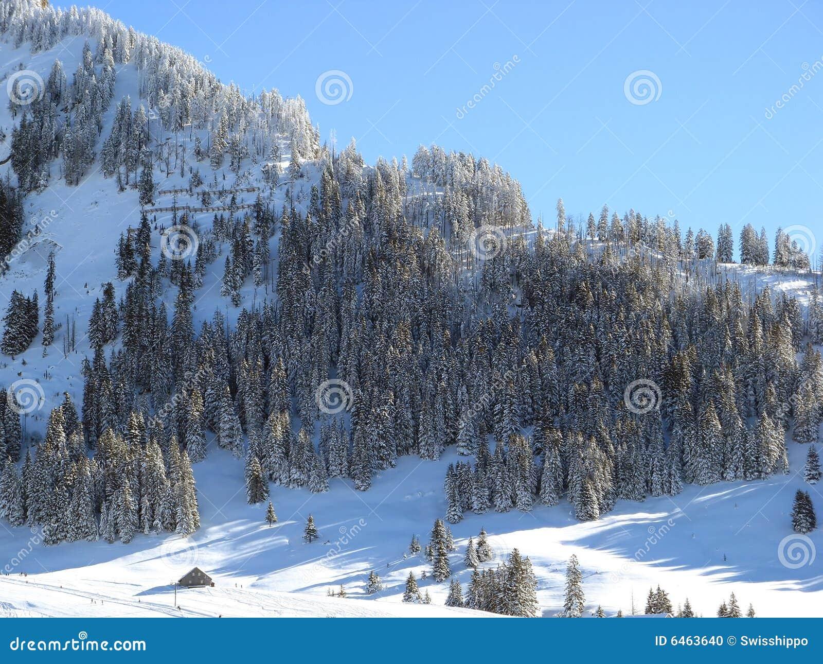 Foresta di inverno