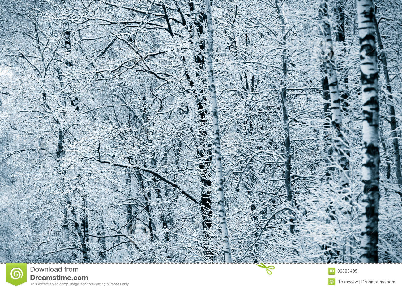 Download Foresta Di Inverno Di Snowy Immagine Stock - Immagine di clima, esterno: 36885495