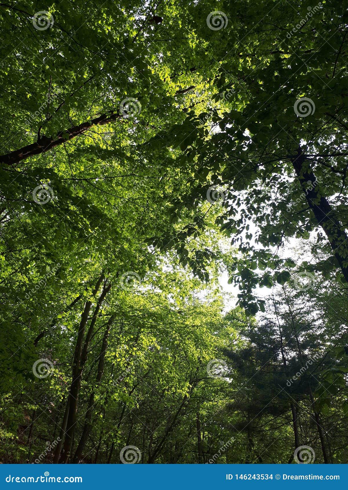 Foresta e sole