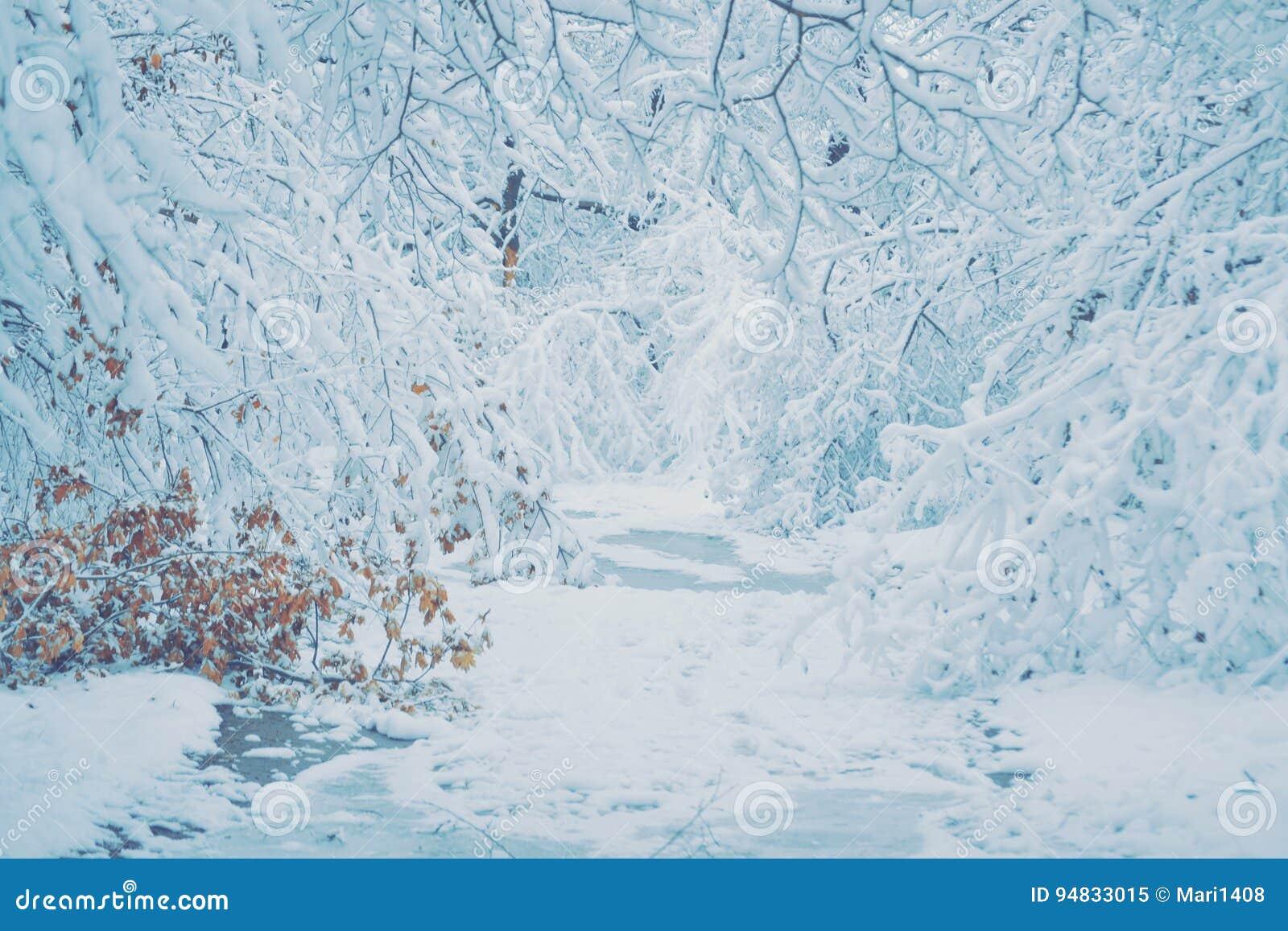 Foto Di Natale Neve Inverno 94.Foresta Innevata Delle Piante Degli Alberi In Filtro Da Inverno