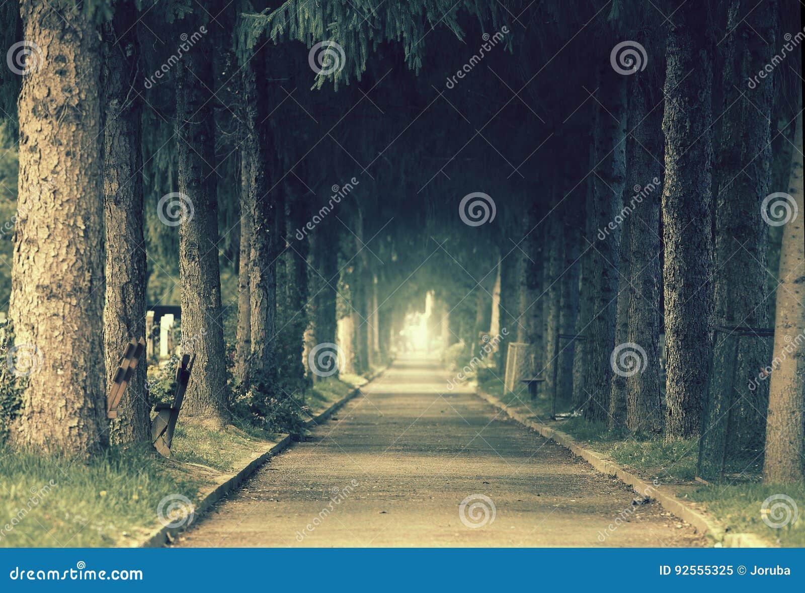 Foresta mistica di umore
