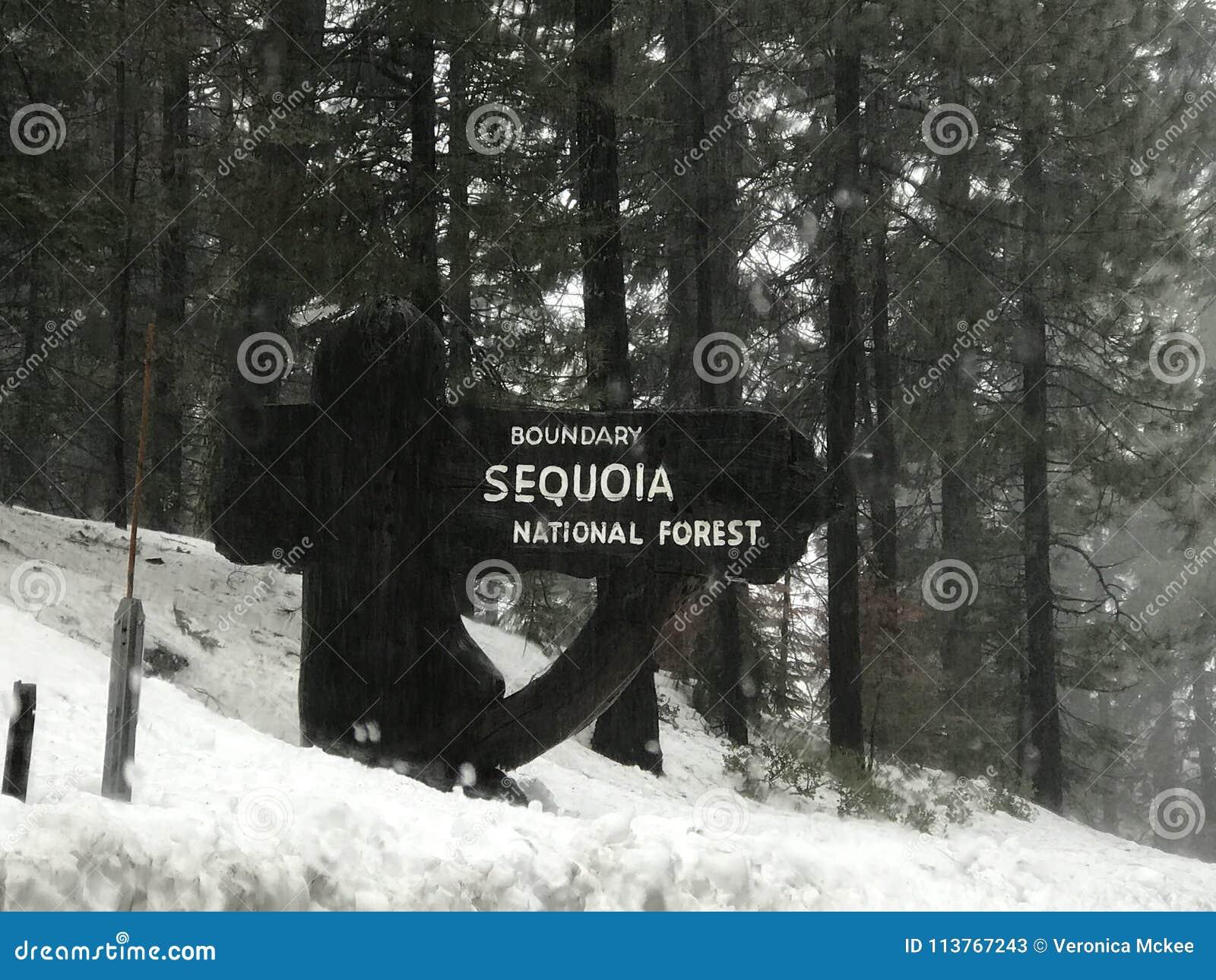 Foresta nazionale della sequoia