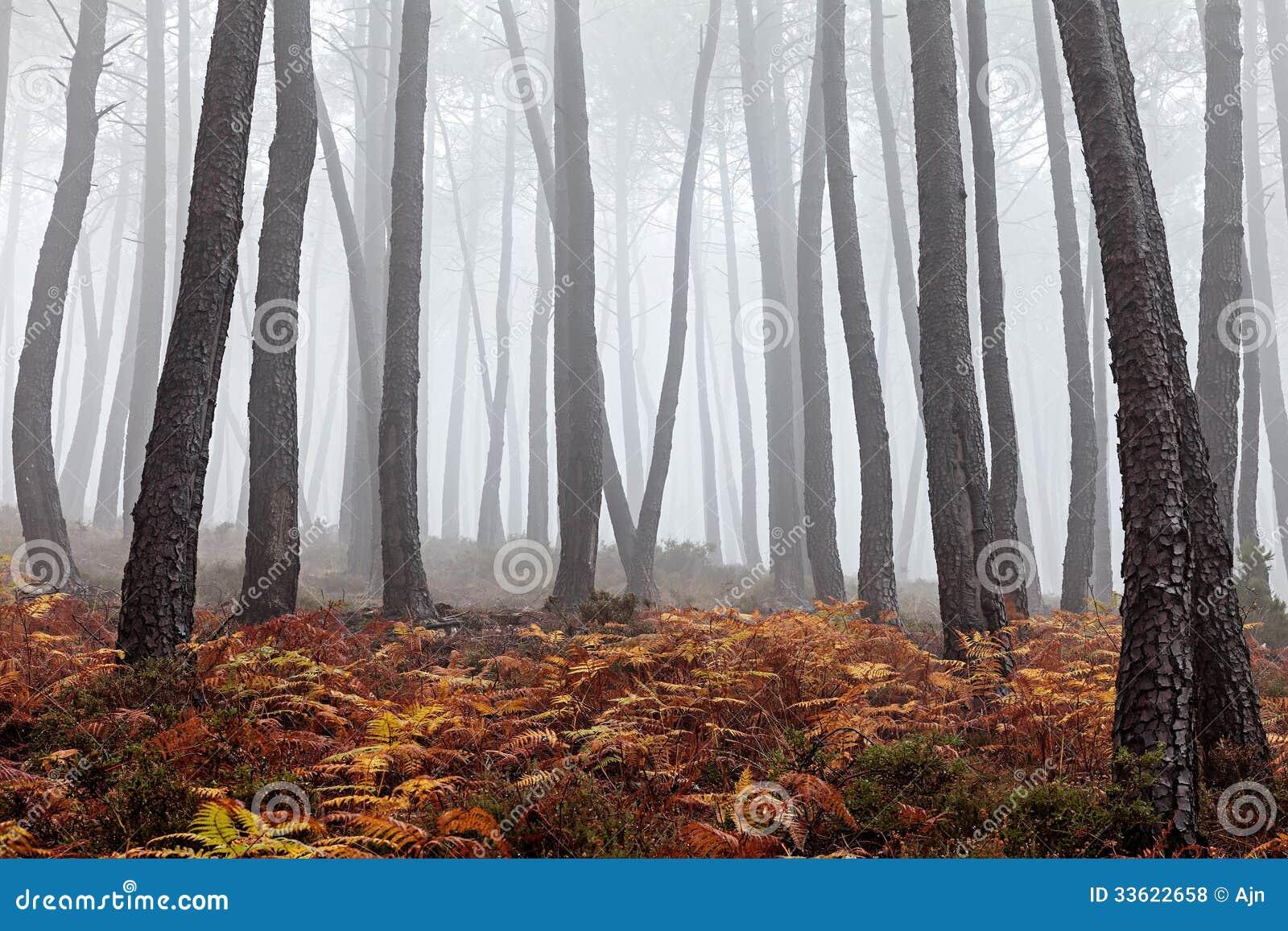 Foresta nebbiosa