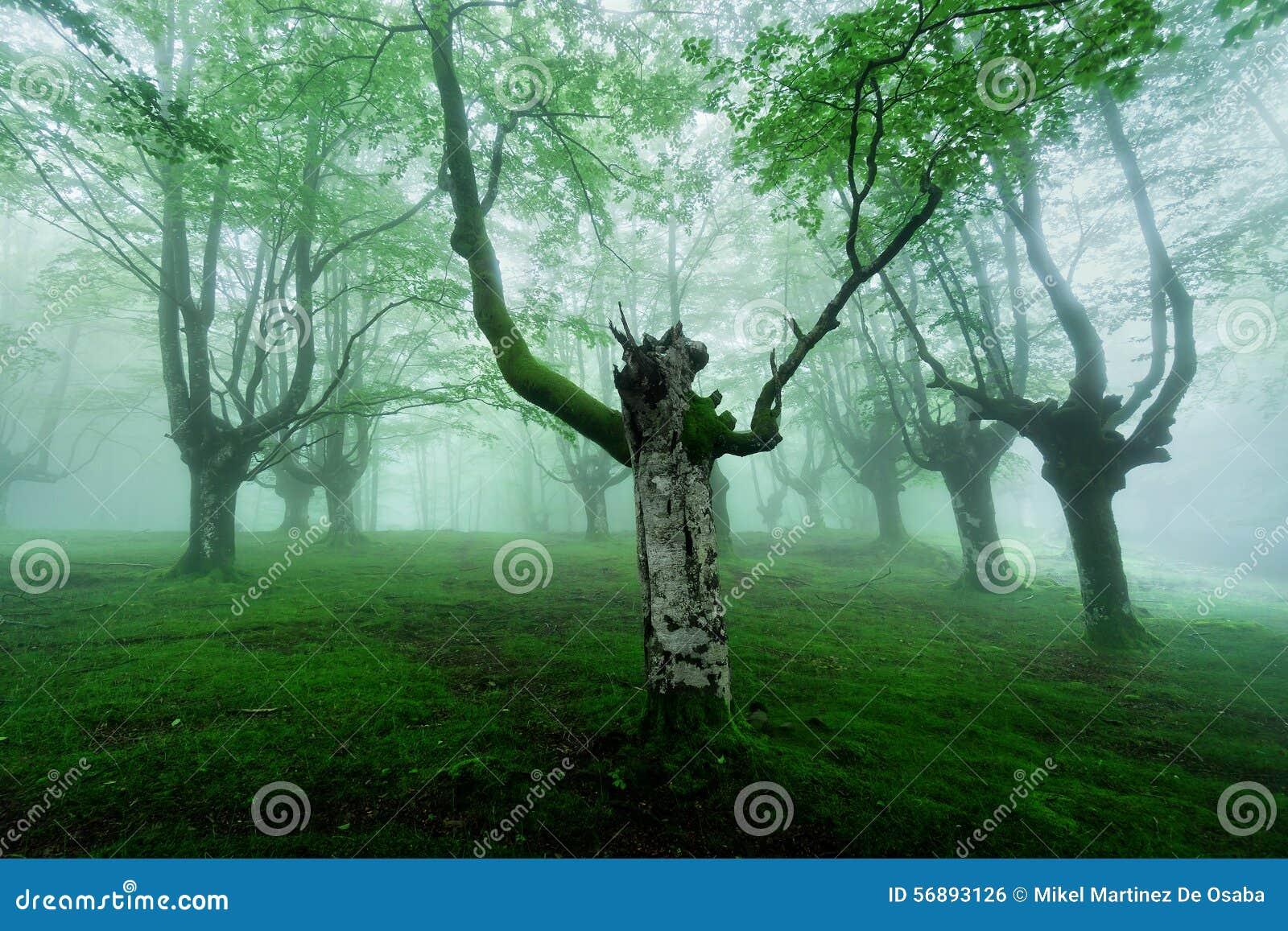 Foresta nebbiosa con nebbia