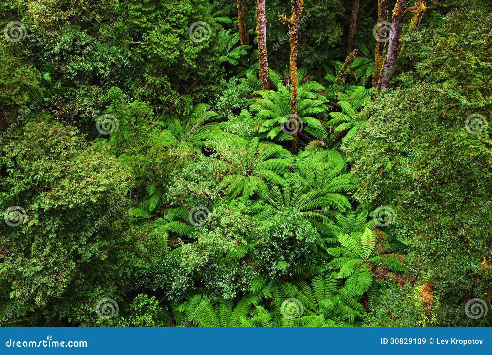 Foresta pluviale australiana famosa
