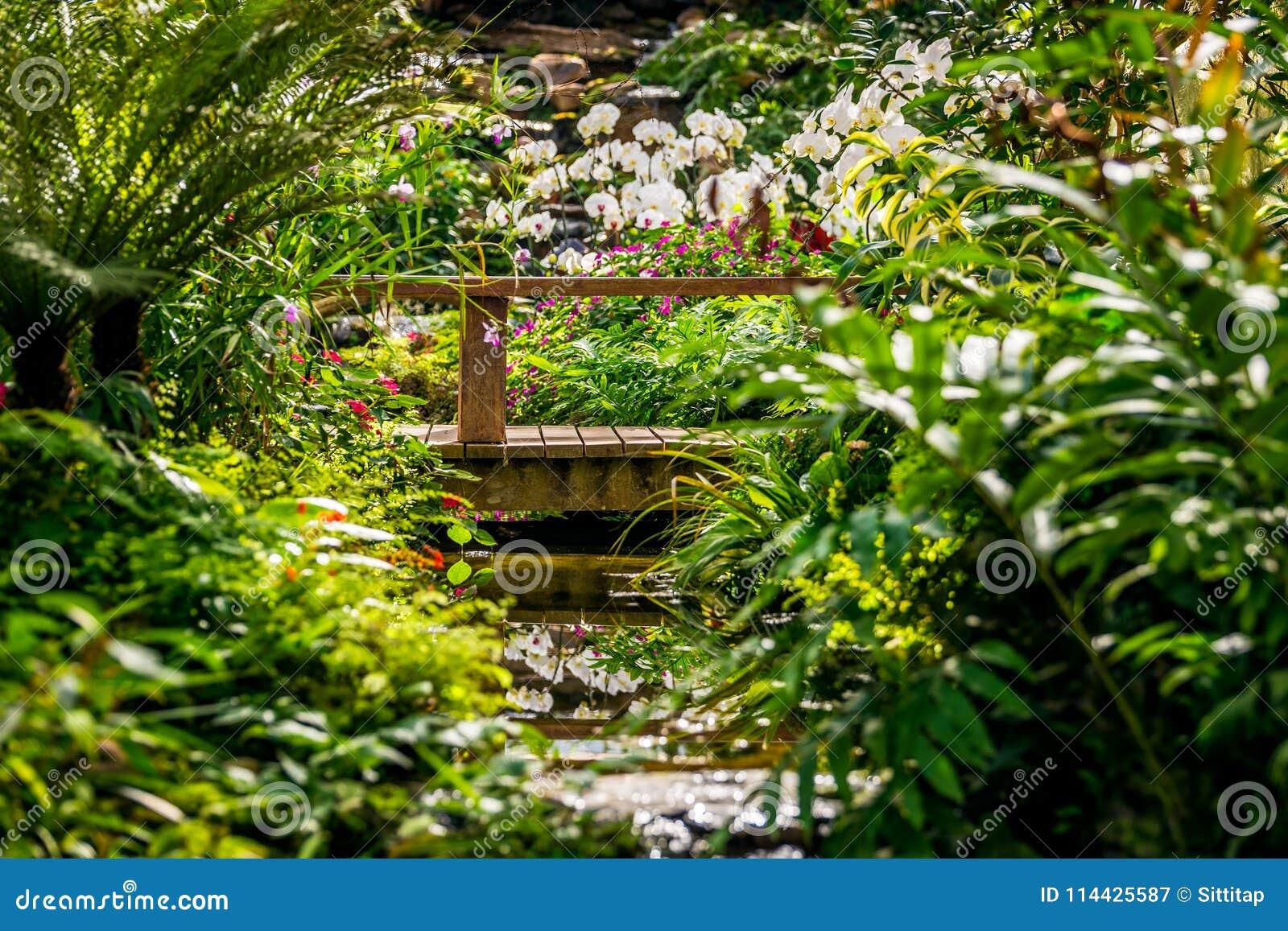 Foresta pluviale dell imitazione del giardino dell orchidea
