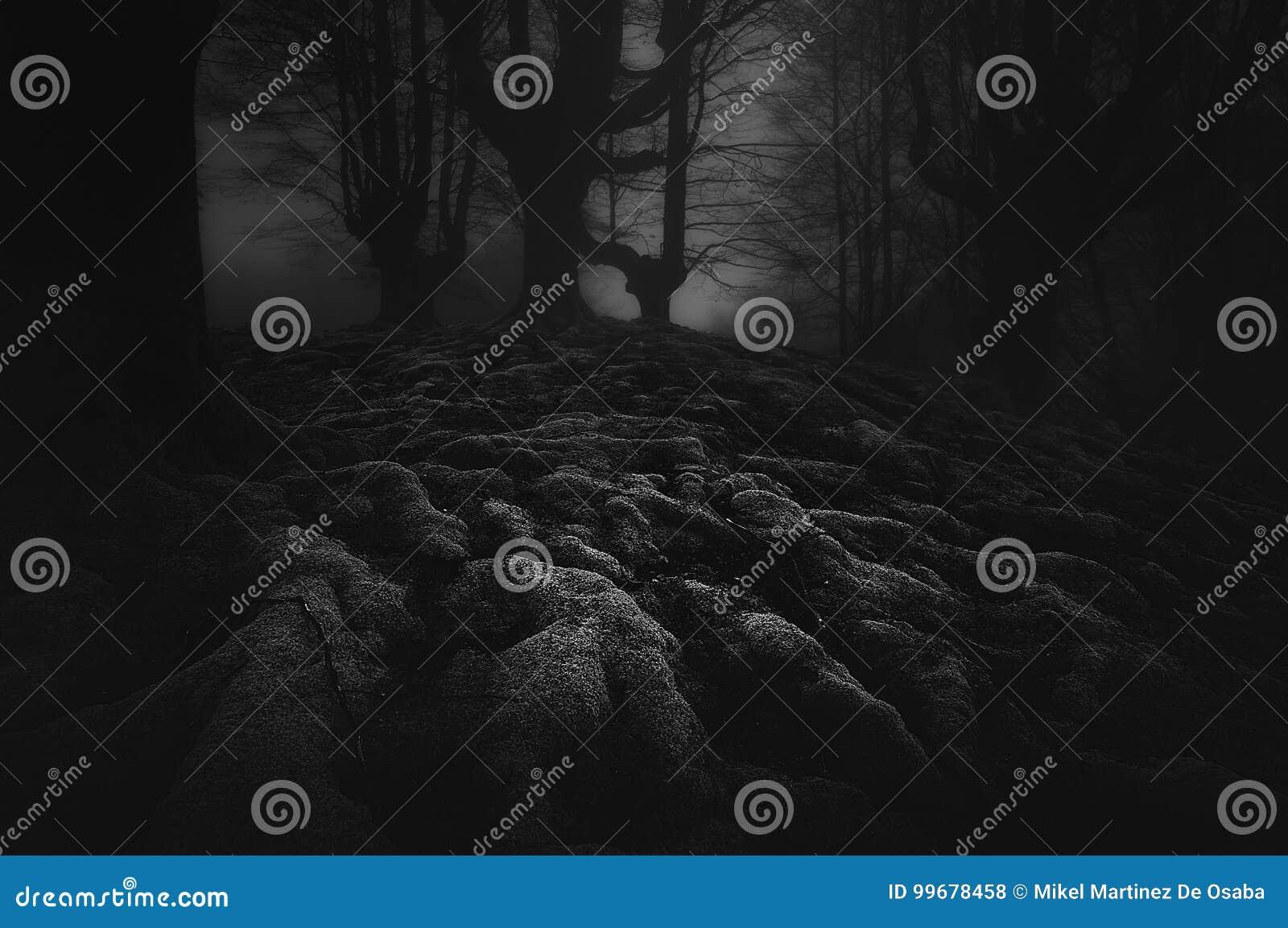 Foresta scura e spaventosa con le radici