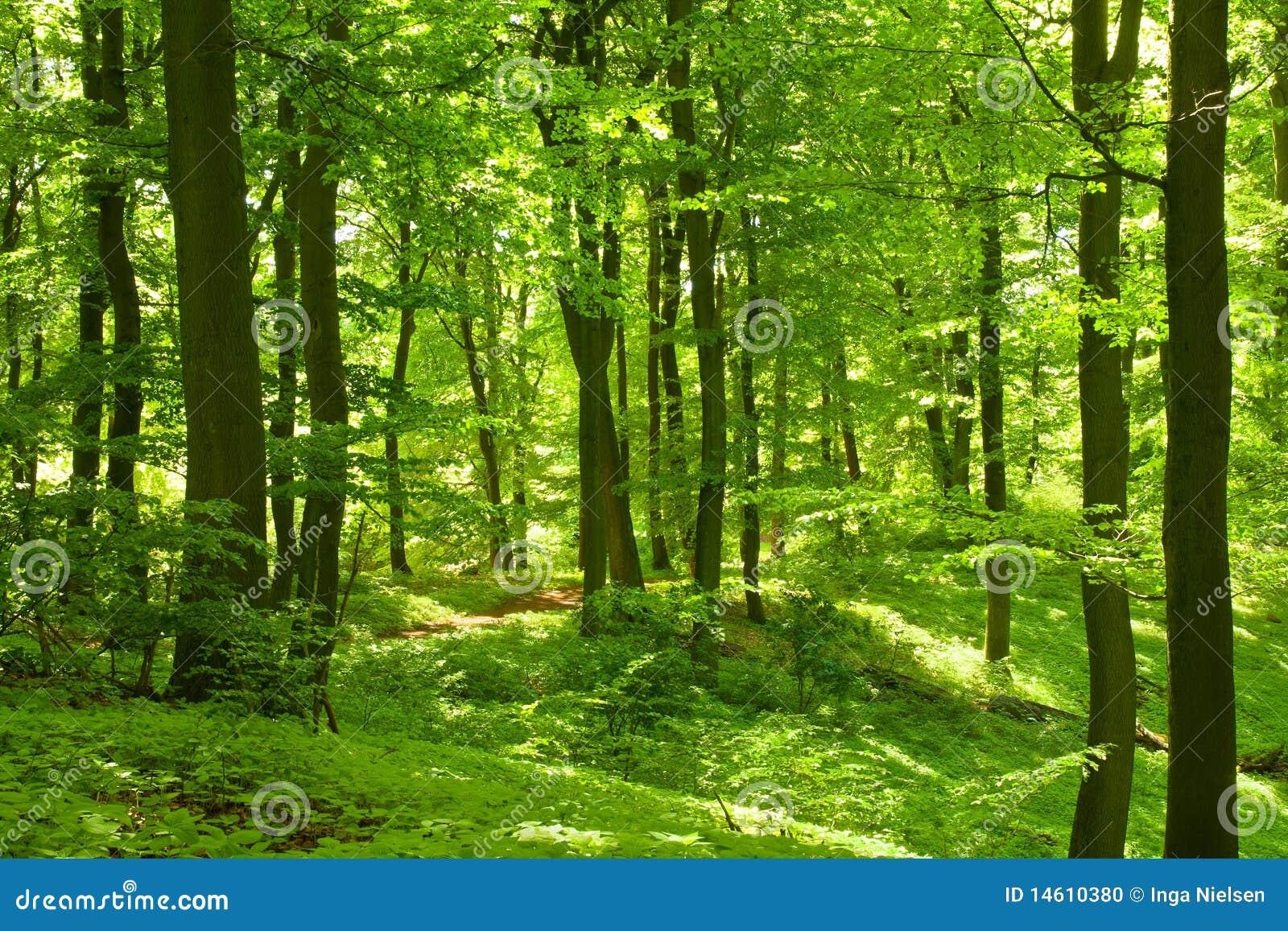 Foresta Floor Plan Foresta Verde Fotografia Stock Immagine 14610380