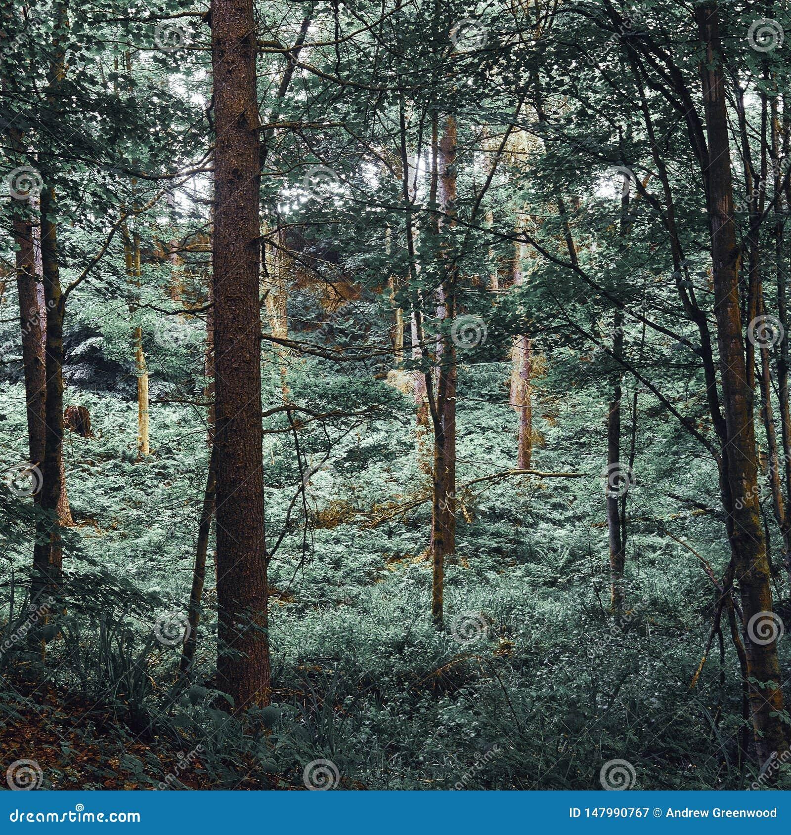 Foreste caotiche del baldacchino verde