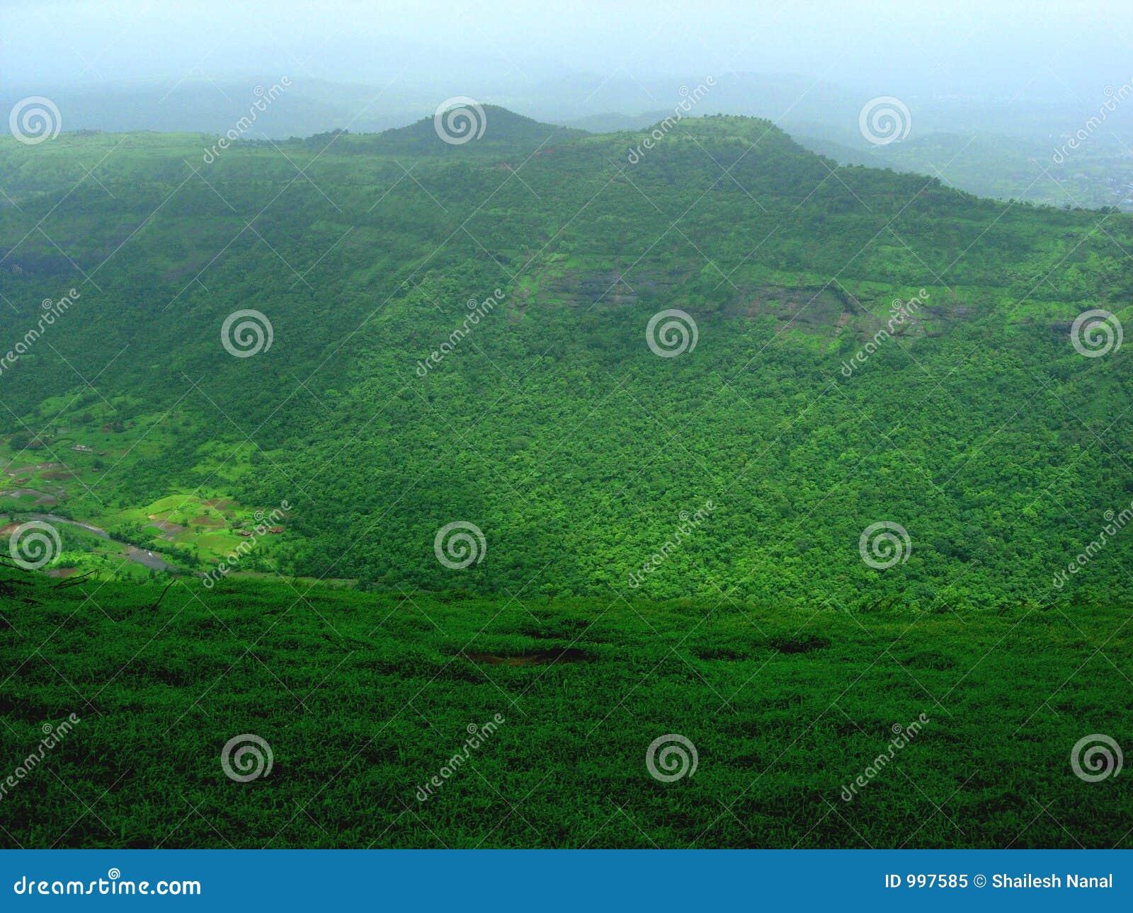 Forested grön liggande