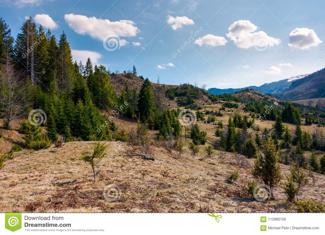Forested rolling hills in springtime