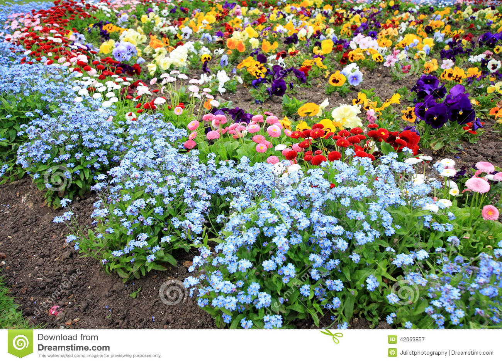 Незабудки: выращивание и уход 82