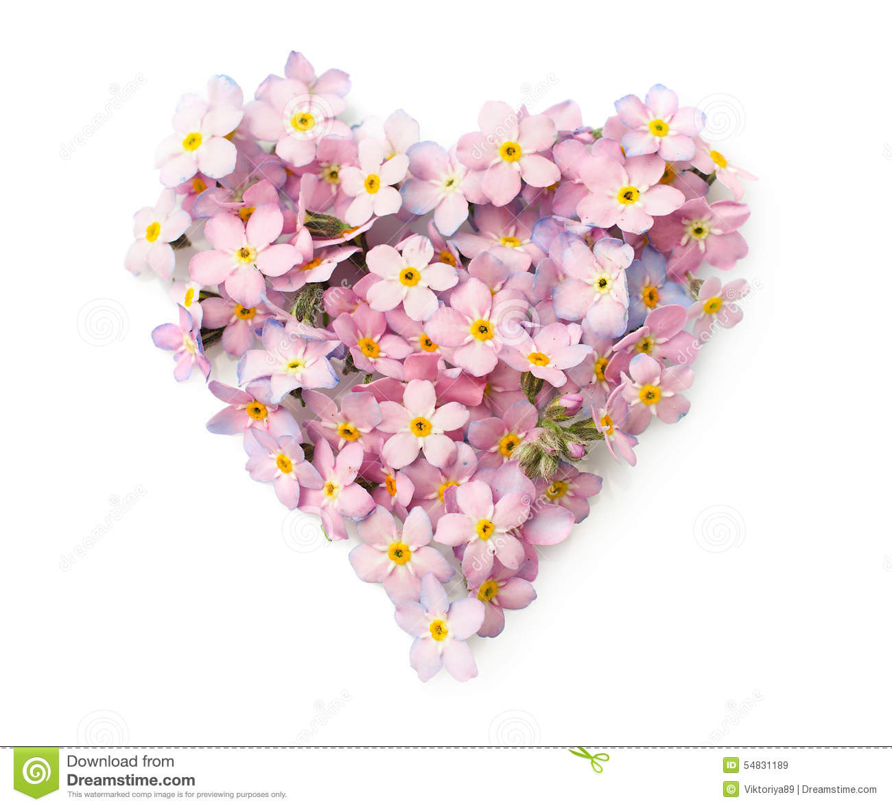 The forget me not flowers in a shape of heart stock image image of the forget me not flowers in a shape of heart mightylinksfo