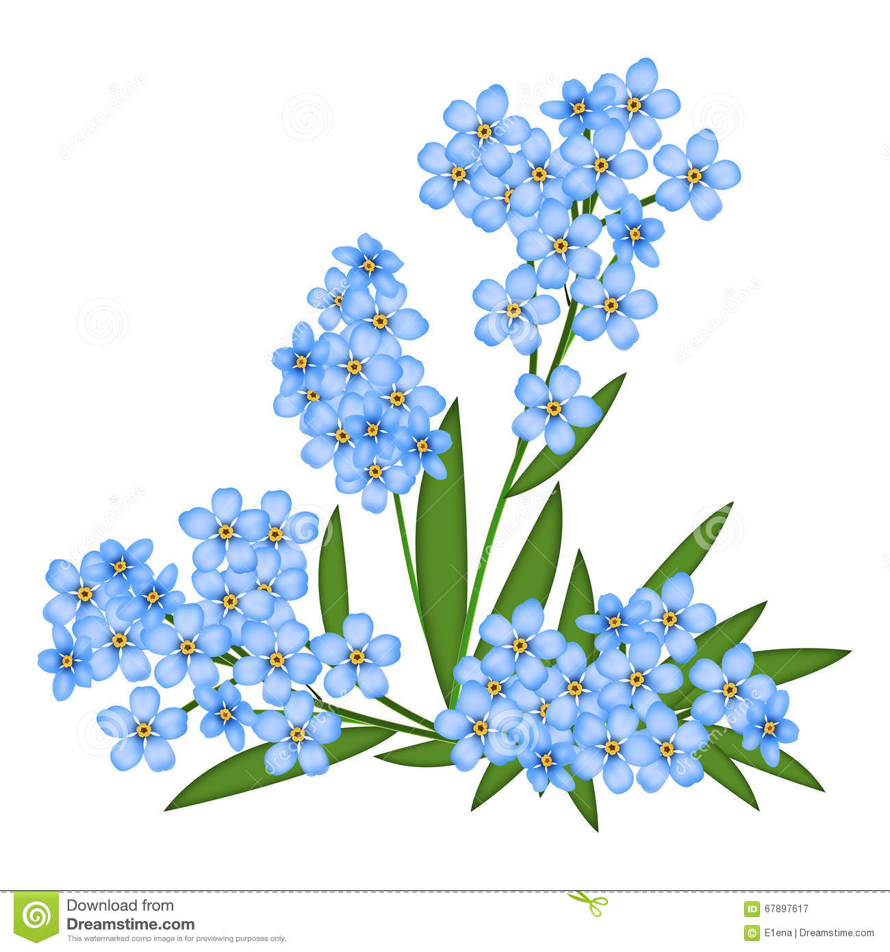 Forget-me-not stock illustration. Image of nobody, object ...